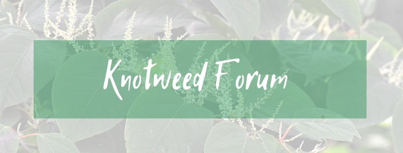 Online Knotweed Forum photo