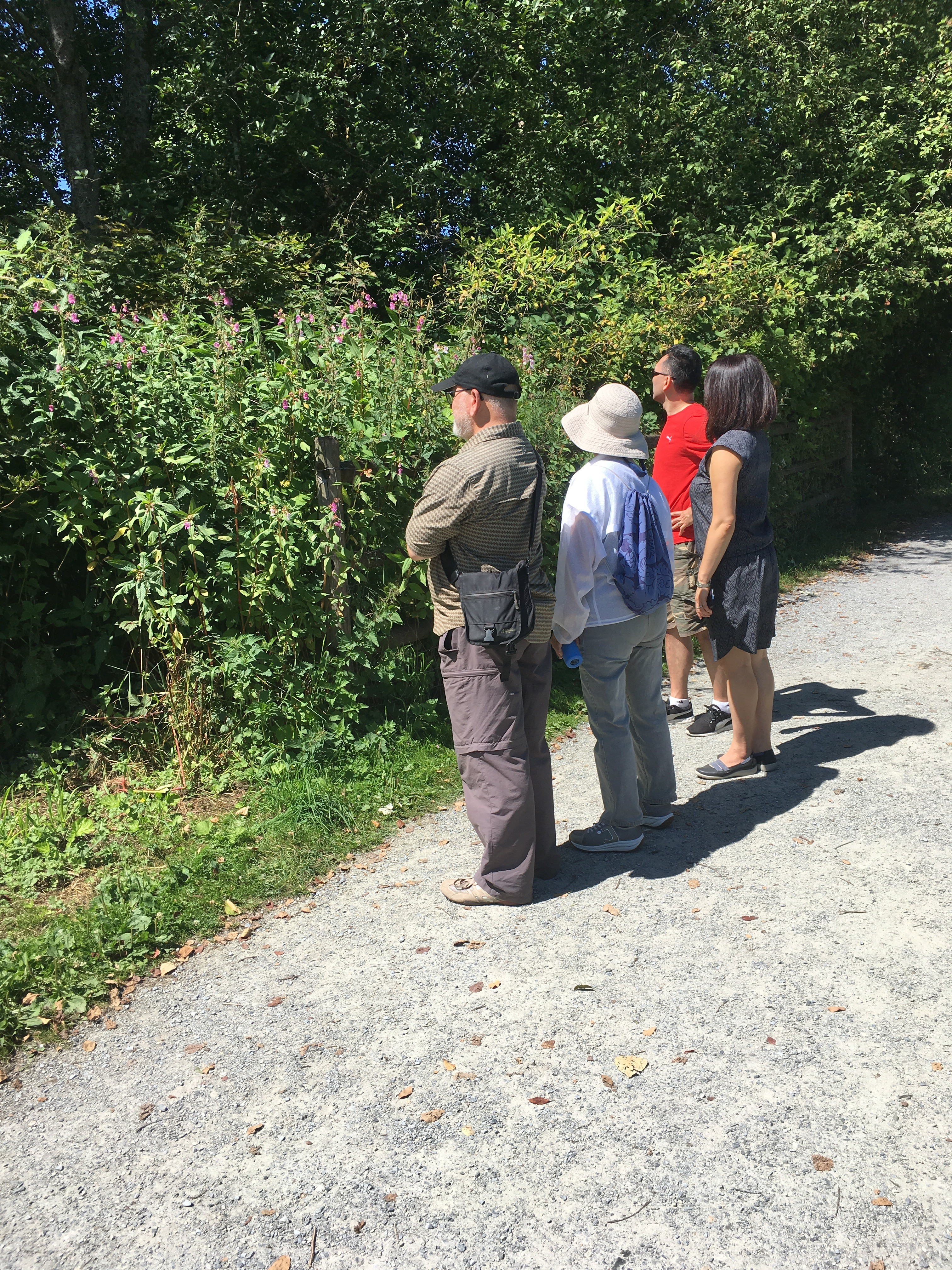 Get to Know Local Plants Guided Walk - Deer Lake 2021 photo