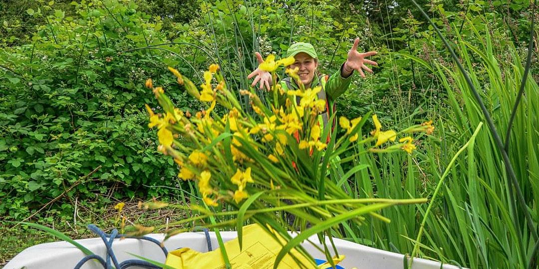 Native and Invasive Plants 101 Webinar photo
