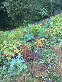 Glenbrook Ravine Planting - October 2019 photo