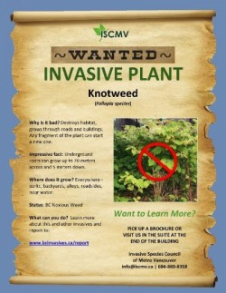 Invasives Coming to a Bathroom Near You? photo