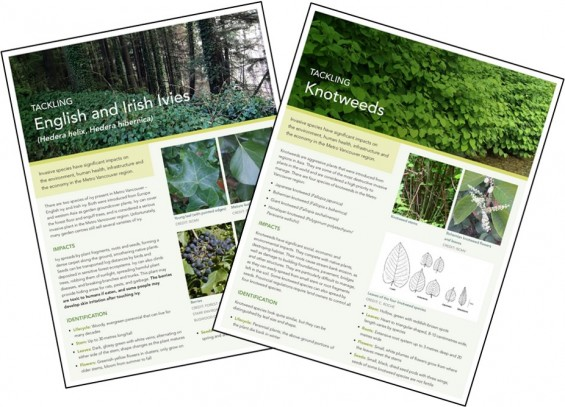 Invasive Species Fact Sheets Available photo