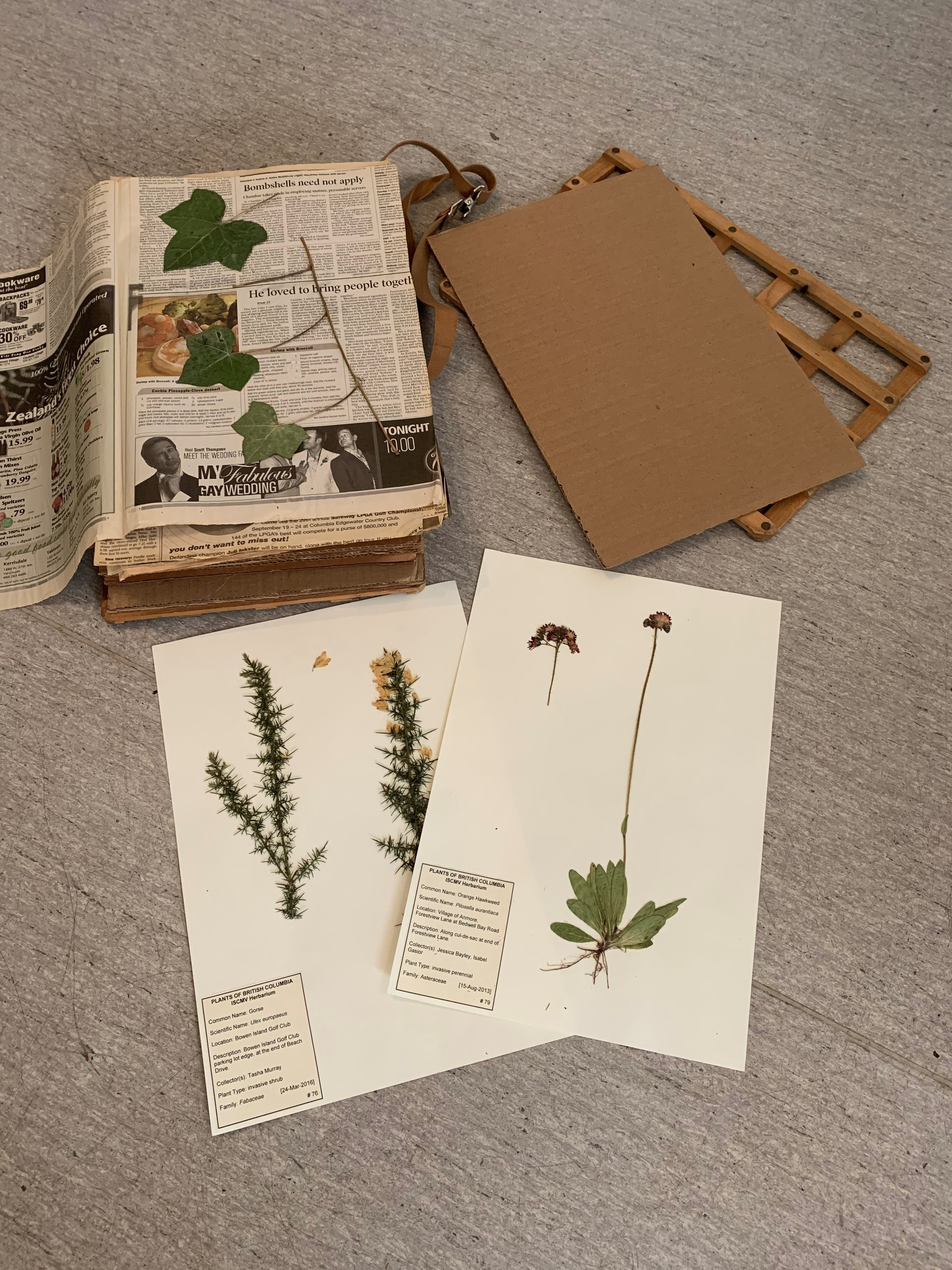 Community Art Workshop #1: Plant Identification and Collection photo